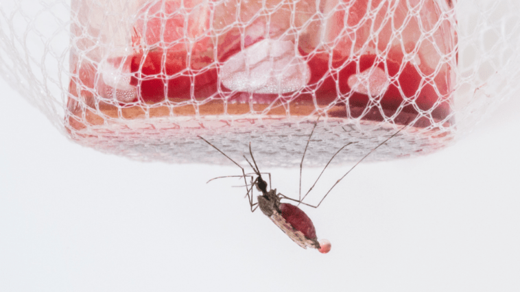 Les Enfants Peuvent être Des Super Propagateurs Furtifs Du Paludisme Sur