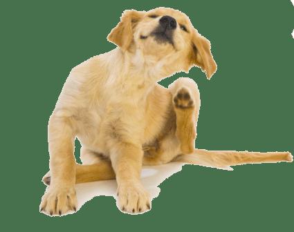 mejores antipulgas para perros