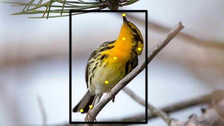 applications pour identifier les oiseaux