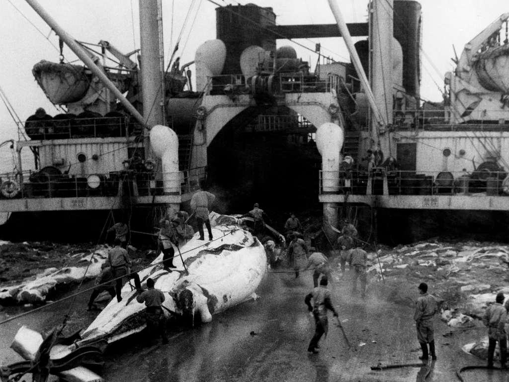 Nous avons profité du massacre de la faune de l'Antarctique depuis sa découverte il y a 200 ans