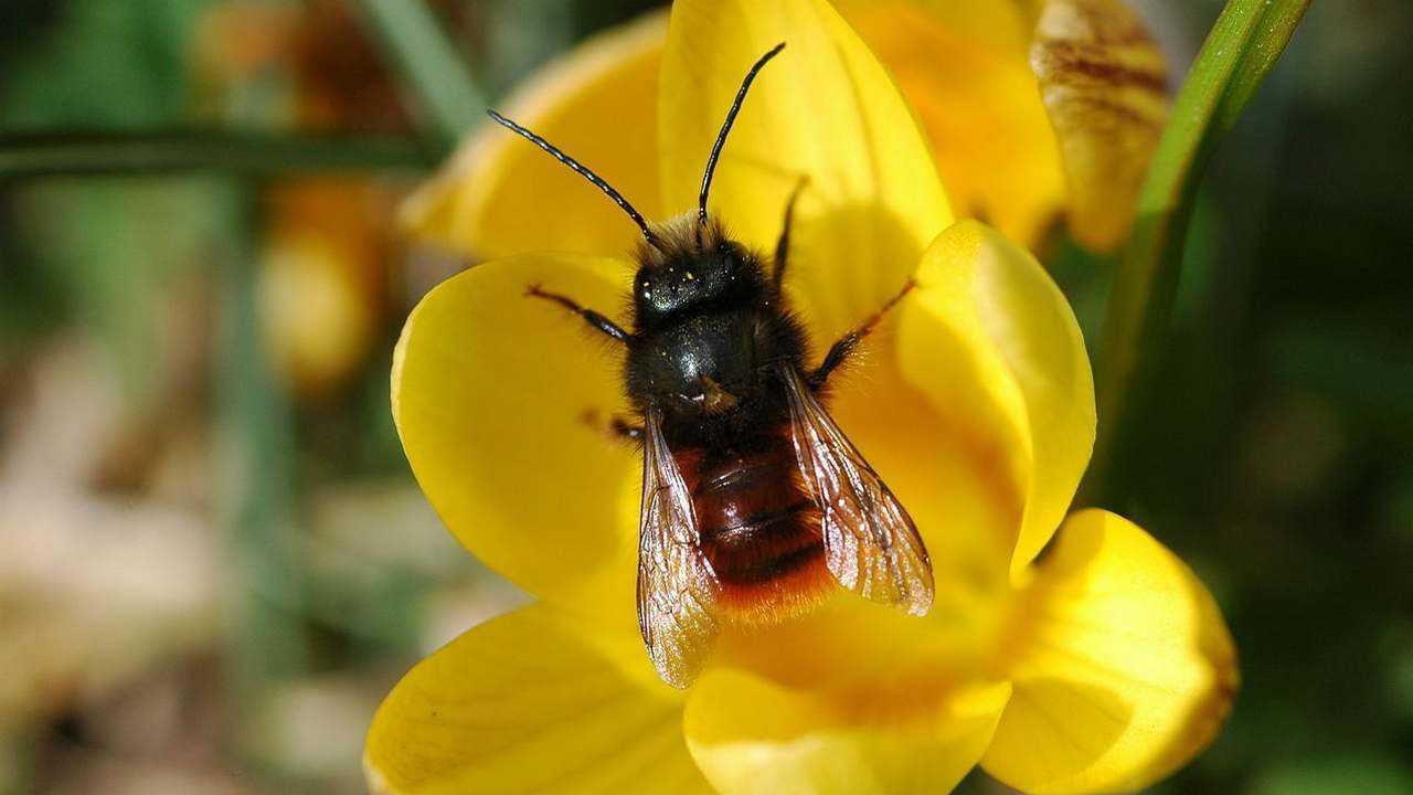 Nouvelle carte développée pour montrer la répartition des espèces d'abeilles et des populations dans le monde
