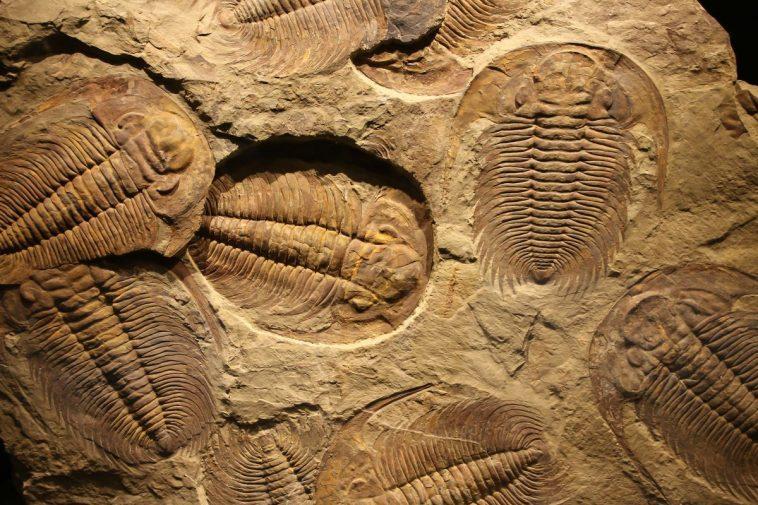 Qu'est Ce Que Les Trilobites Ont Disparu?