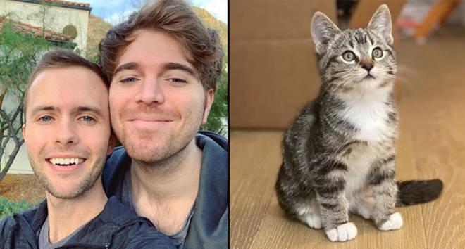 Shane Dawson et Ryland Adams ont le cœur brisé après la mort soudaine du chat Mario