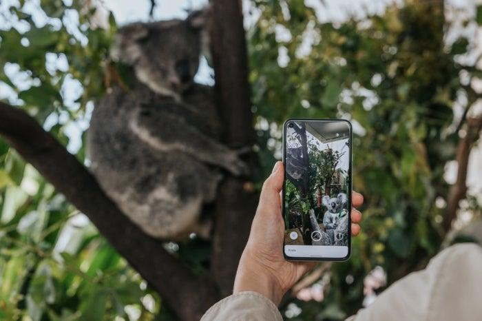 L'AR de Google salue la faune australienne.