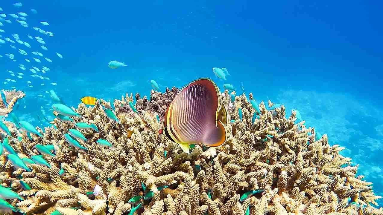 Quatre-vingt-trois des 252 sites du patrimoine mondial gravement touchés par le changement climatique préviennent un rapport de l'UICN