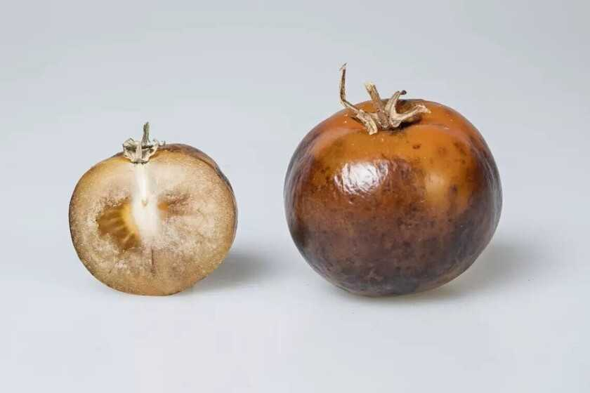 Ils ne sont pas les meilleurs au monde, mais ces tomates veulent révolutionner la façon dont nous combattons la maladie de Parkinson dans une grande partie du monde