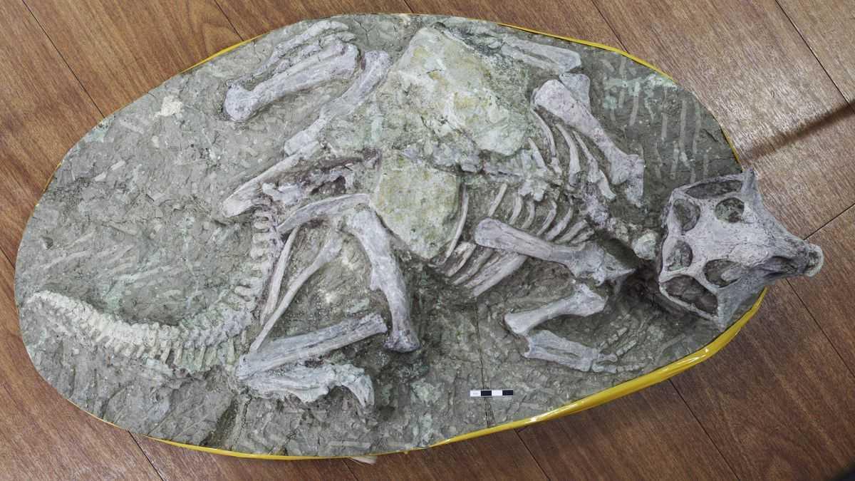 Les Fossiles De Pompéi Du Crétacé Incroyablement Préservés Ne Sont