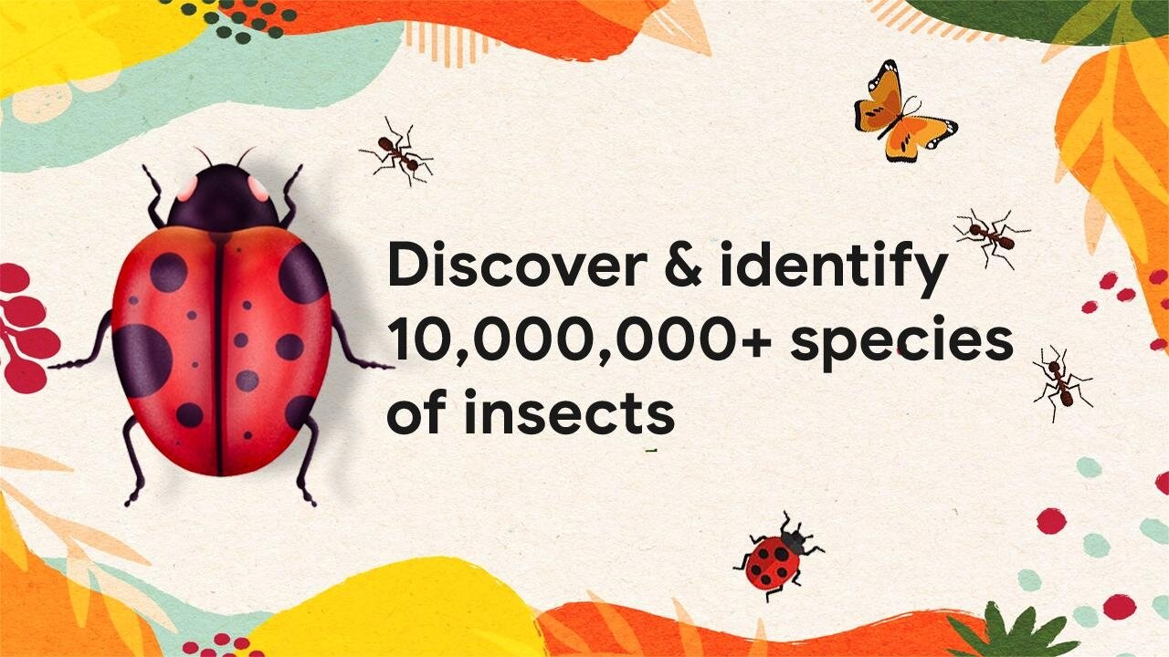 Application d'identification d'insectes