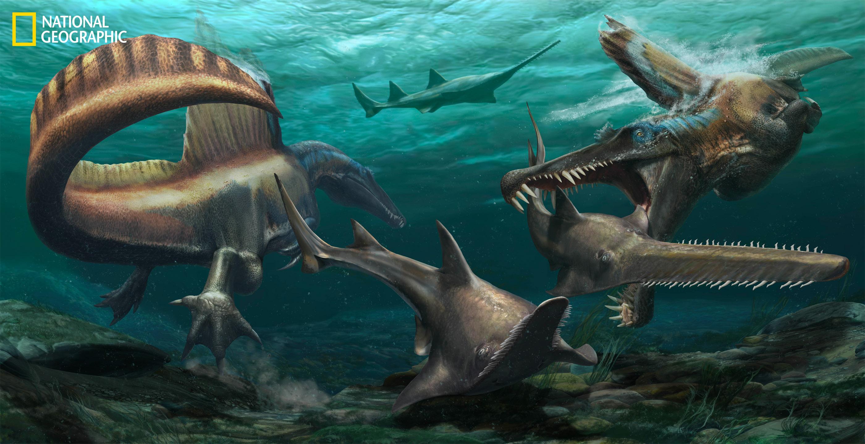 Deux Spinosaurus chassent l'Onchopristis, un poisson-scie préhistorique, dans les eaux du système fluvial Kem Kem dans l'actuel Maroc.