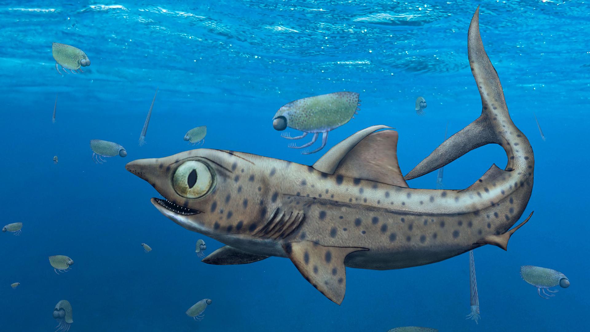 Illustration du requin préhistorique Ferromirum oukherbouchi.