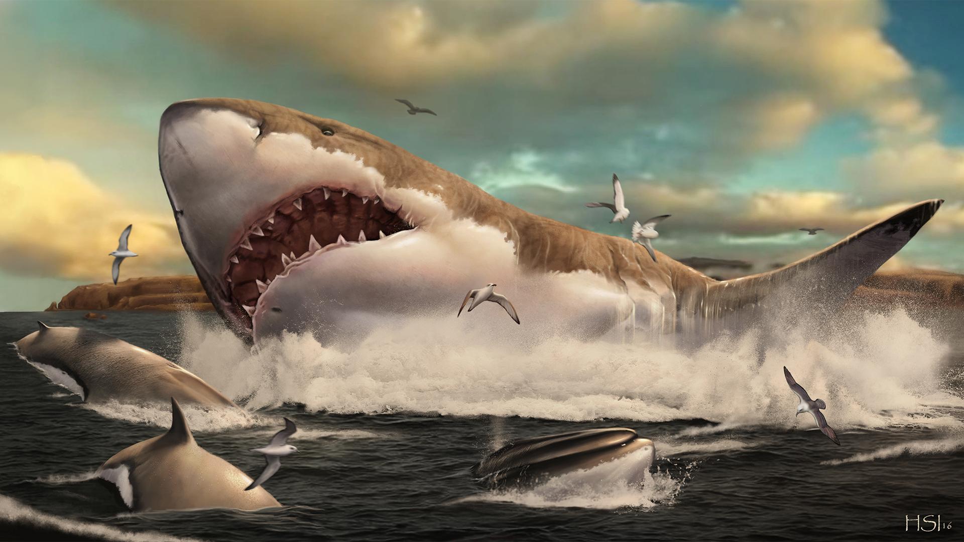 Représentation d'artiste d'un mégalodon sortant de l'eau alors que les oiseaux et les dauphins sautent hors du chemin.