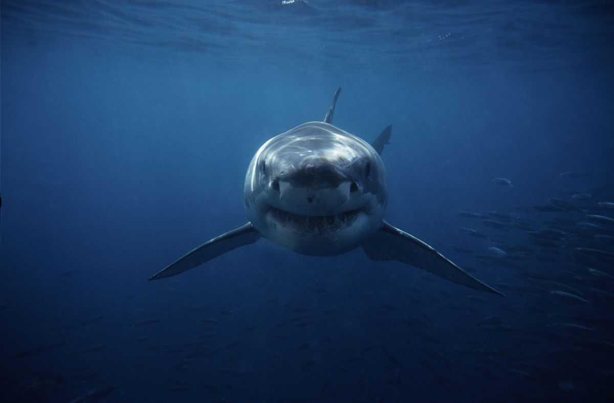 10 Fois Que Les Requins Ont Fait Tomber Nos Mâchoires