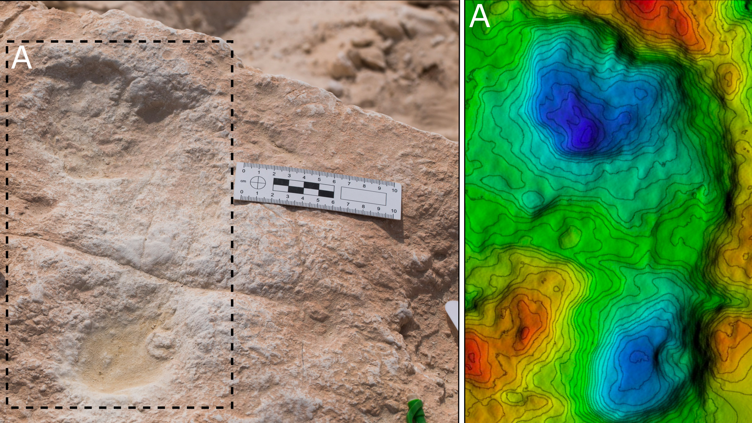 Il s'agit de la première empreinte humaine découverte à Alathar et de son modèle d'élévation numérique correspondant.