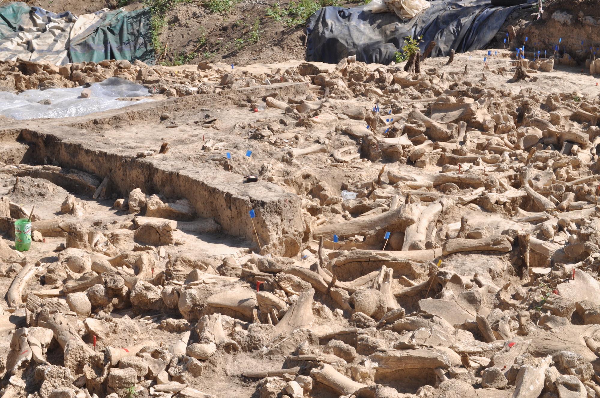 Les archéologues ont trouvé des os appartenant à des mammouths, des rennes, des chevaux, des ours, des loups, des renards roux et des renards arctiques