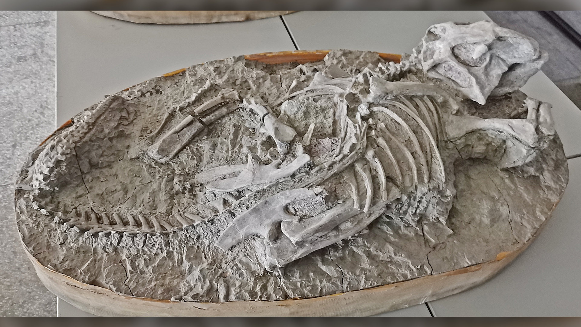 Des échantillons de matrice de ce fossile de P. lujiatunensis (IVPP-18344) ont offert des indices sur la mort du dinosaure.