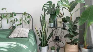 Plante, Pourquoi Et Pourquoi Je Te Veux Dans La Pandémie