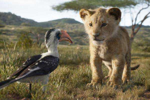 """Script Pour """"roi Lion"""" Prequel Ravit Le Réalisateur Jenkins"""