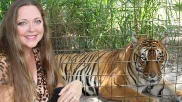 Tiger Attacks Staffer Au Sanctuaire De Sauvetage Big Cat De