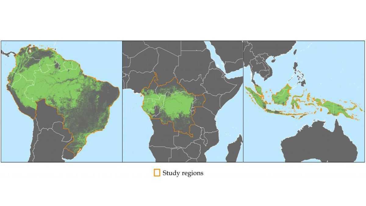 Comment Les Satellites Arrêtent La Déforestation En Afrique