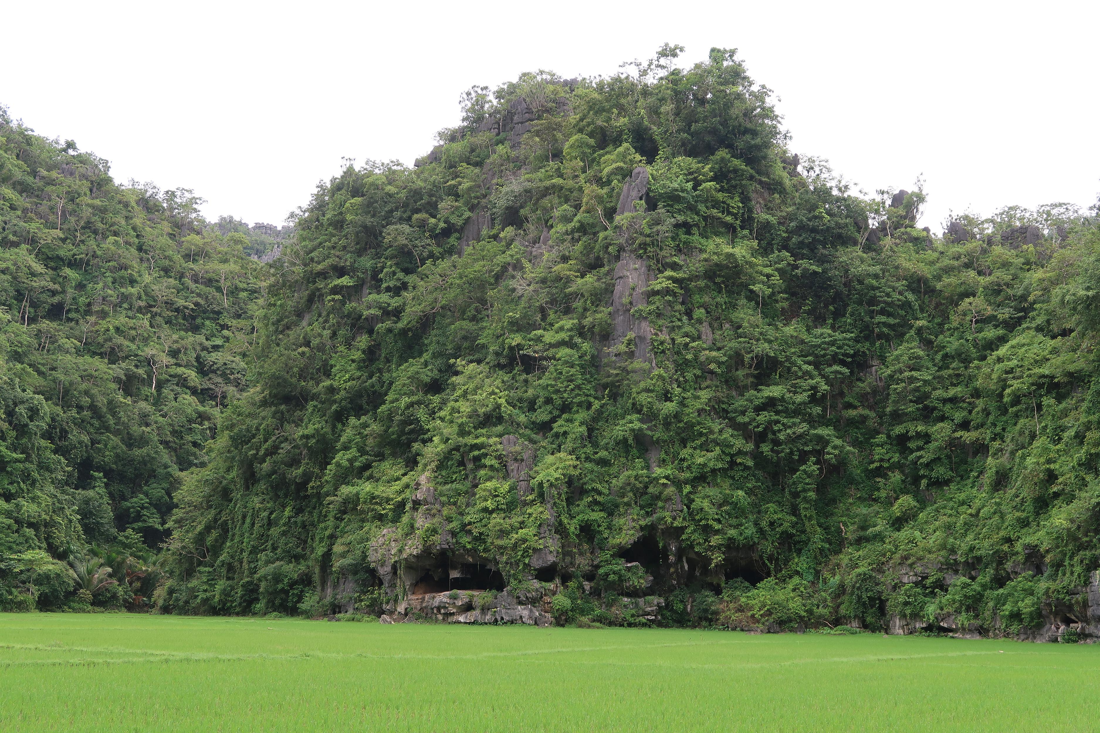 La vue extérieure de la grotte de Leang Tedongnge.