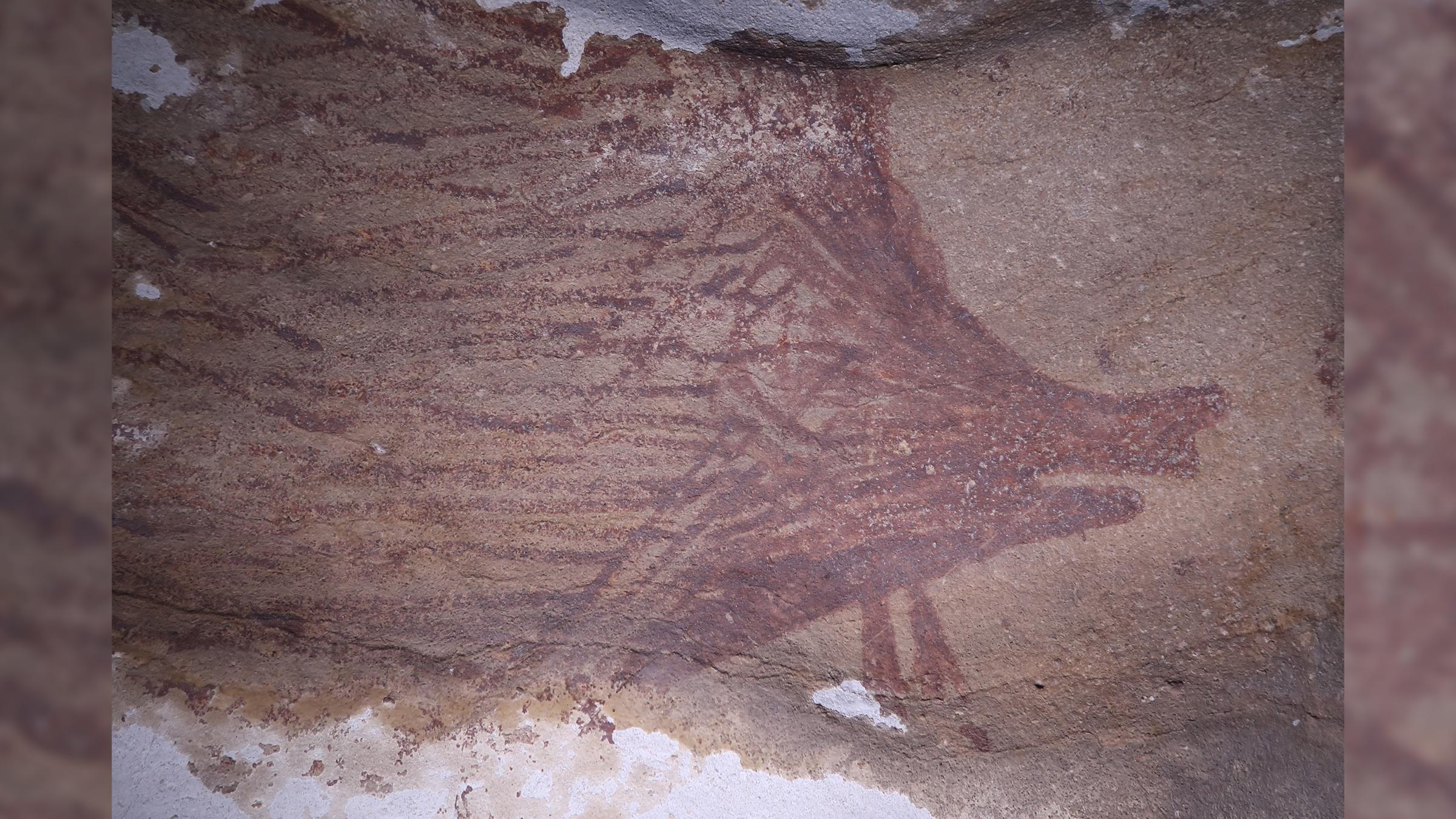 Le deuxième porc de la grotte Leang Tedongnge mesurait 4,1 sur 1,7 pieds (125 sur 53 cm).