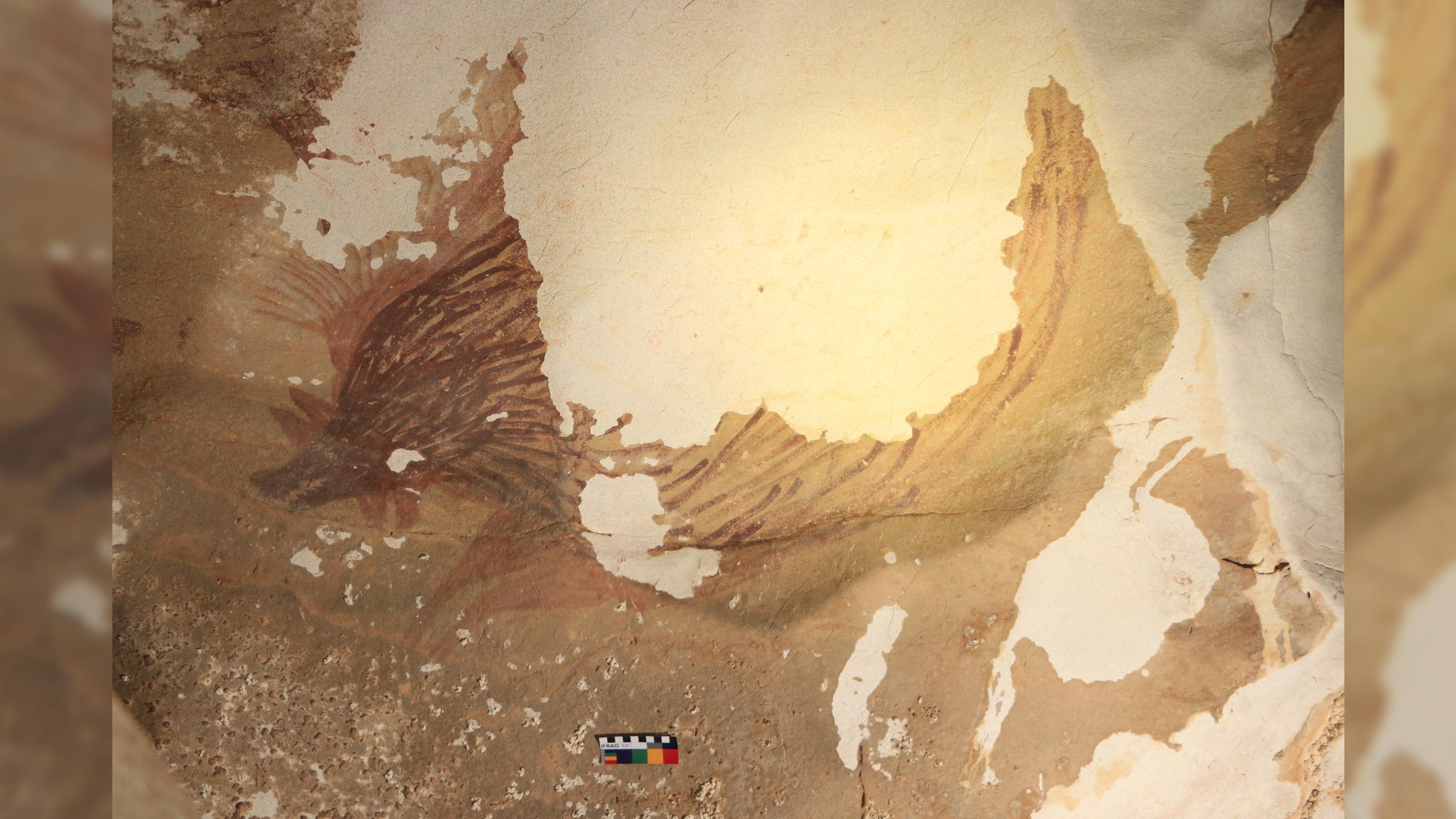 Un autre cochon verruqueux à la grotte Leang Tedongnge mesurant 4,5 sur 2,3 pieds (138 sur 71 cm).