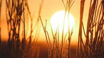 2020 est à égalité avec 2016 comme l'année la plus chaude de l'histoire depuis qu'il y a des records, selon les données de la NASA
