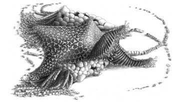 Cette Créature De 480 Millions D'années Est L'ancêtre De Toutes