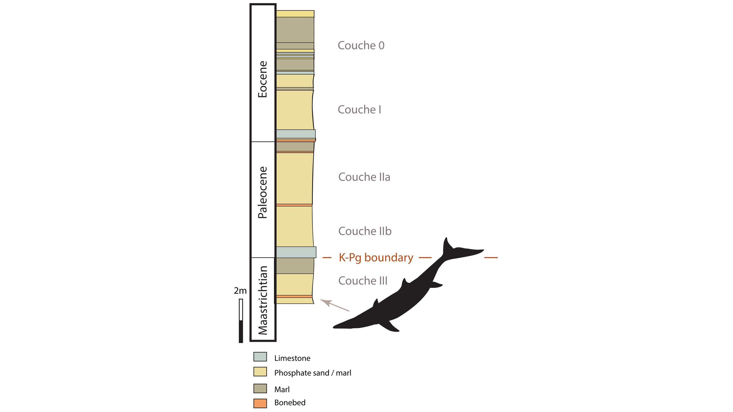 Les fossiles appartenant au nouveau mosasaure ont été trouvés dans une roche plus ancienne que la limite K-Pg, un terme utilisé pour désigner l'extinction de masse qui a tué les dinosaures non aviaires.