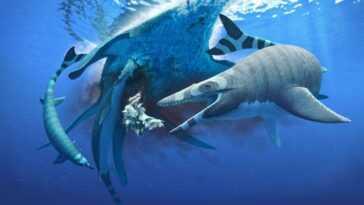 Le Mini Monstre Marin Avait Des Dents Aussi Tranchantes Qu'une Lame