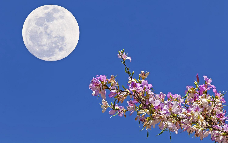 La pleine lune des fleurs aura lieu le 29 mai 2018.