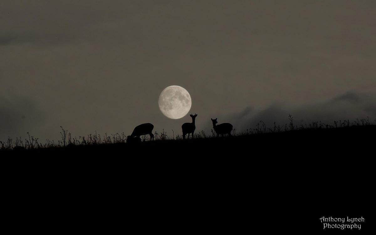 L'astrophotographe Anthony Lynch a envoyé cette photo de la Harvest Moon, septembre 2013, prise au Phoenix Park à Dublin, en Irlande.