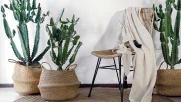 Cactus Tourne Une Nouvelle Fièvre Dans Tous Les Environnements