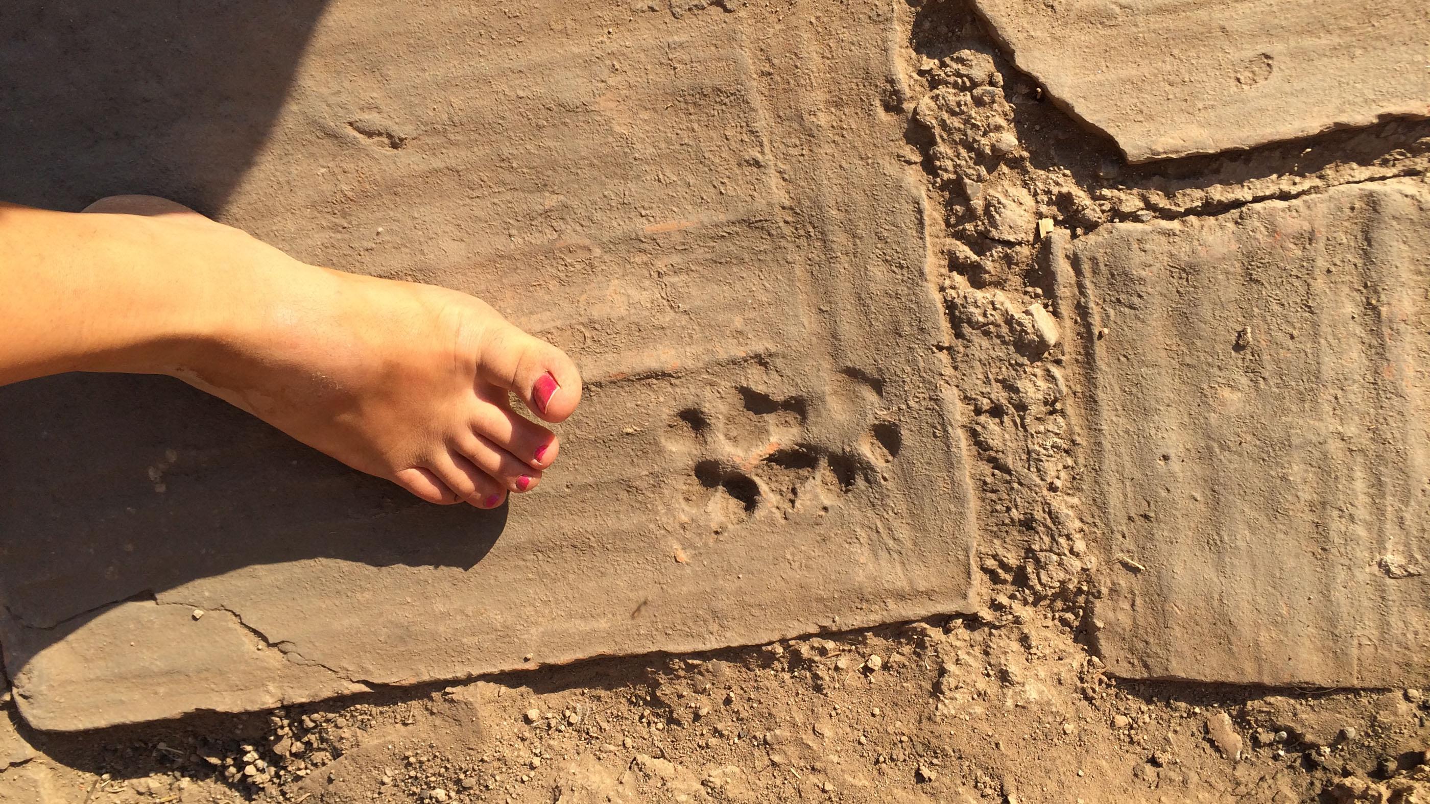 L'excavatrice Lauren DiSalvo et d'autres chercheurs ont découvert une empreinte de patte de chien sur l'un des carreaux de sol en terre cuite de la maison.