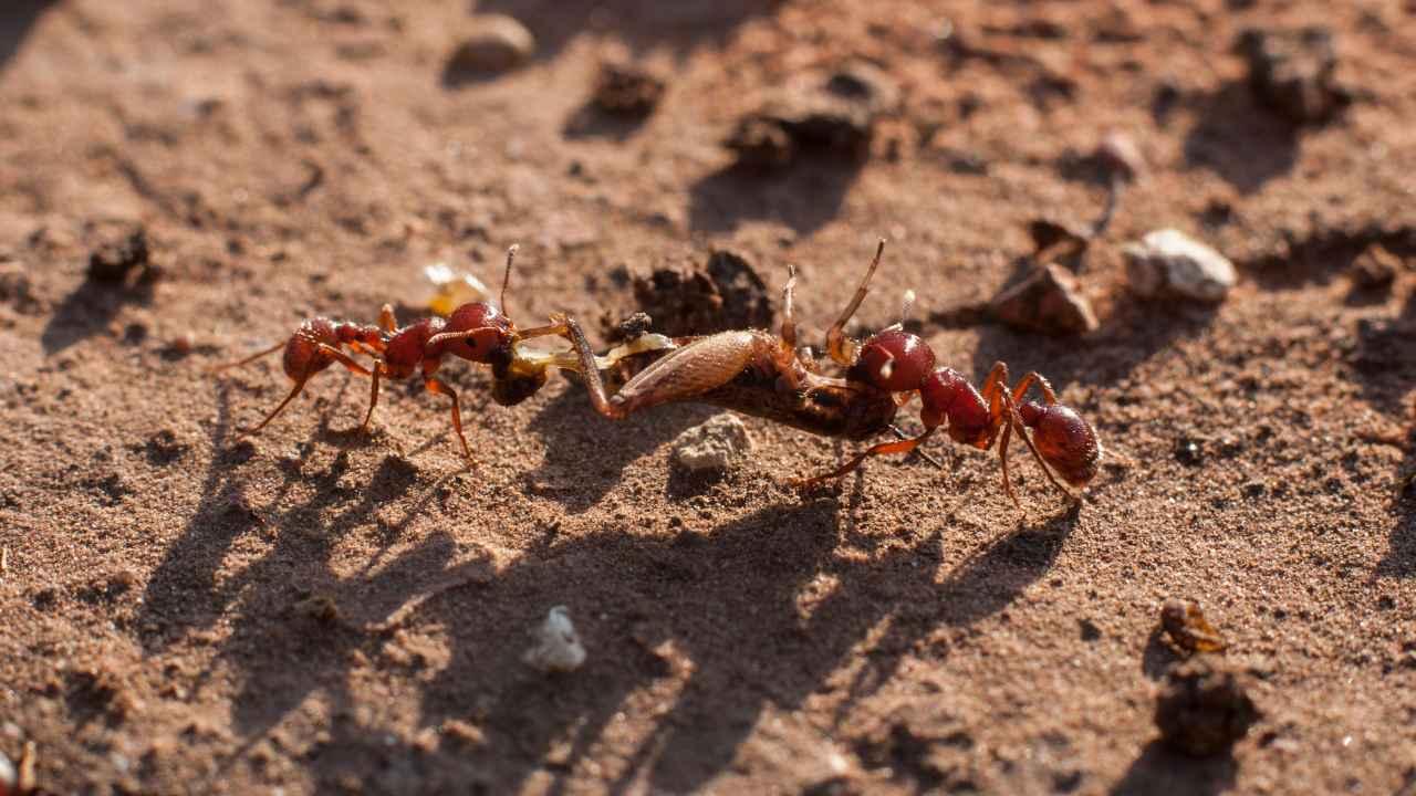 Deux nouvelles espèces de fourmis rares découvertes au Kerala et au Tamil Nadu par des chercheurs