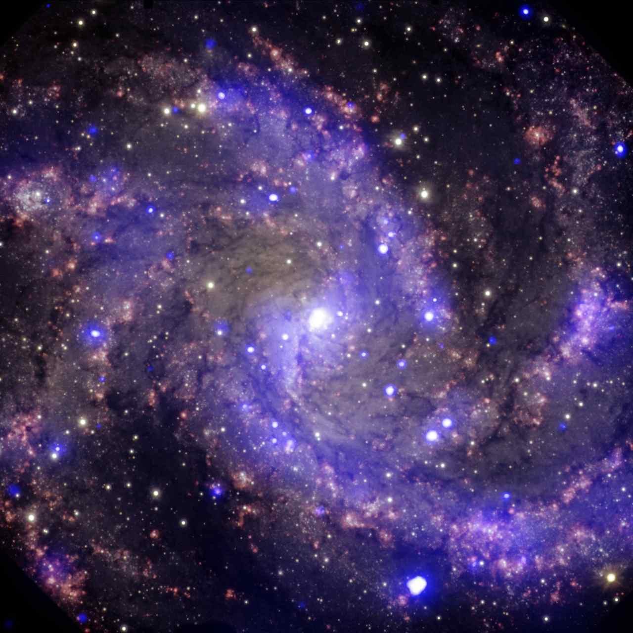 La NASA partage l'image Hubble de l'éblouissante galaxie NGC 6946 de feux d'artifice sujettes aux supernova