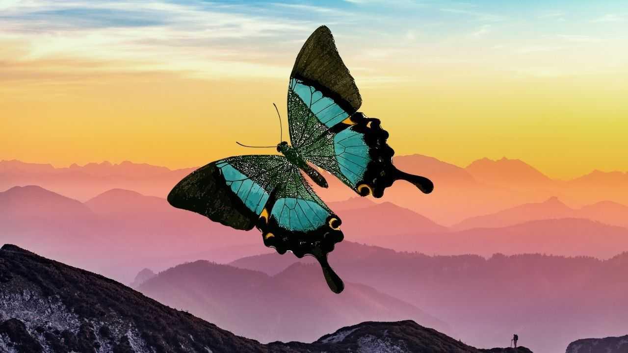 Les Ailes De Papillon Sont Parfaitement Conçues Pour Leur Donner