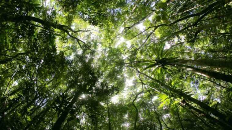 Le Carbone Pourrait Stimuler La Croissance Des Forêts Et Des