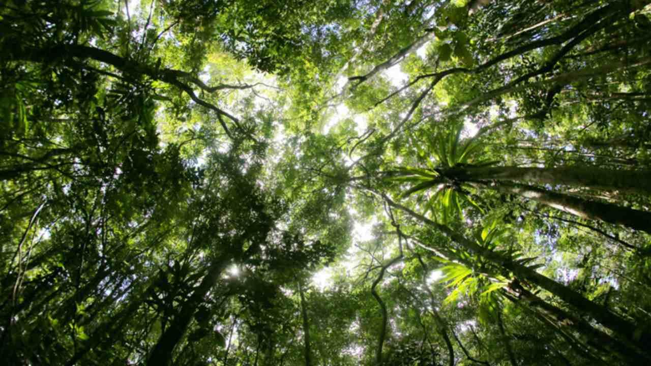 Le carbone pourrait stimuler la croissance des forêts et des prairies, mais la capacité d'absorption du sol diminue