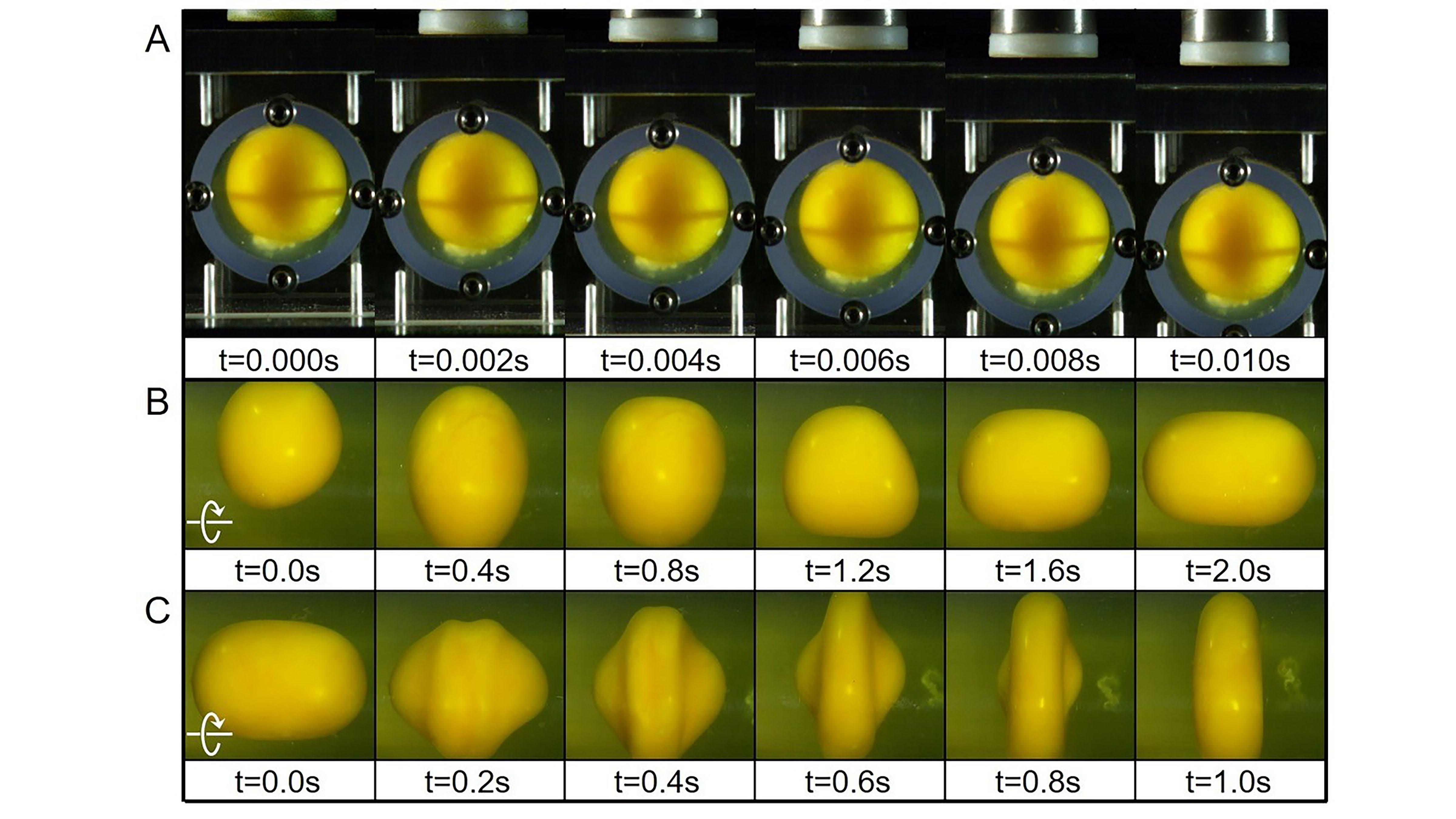 Images des blancs et jaunes d'œufs lors de différentes expériences.  La rangée supérieure d'images montre la chute du marteau, là où le jaune ne s'est pas déformé.  La deuxième / rangée du milieu montre la rotation d'accélération, où le jaune s'étire horizontalement.  La dernière / dernière rangée montre la décélération, où le jaune devient un disque vertical plat.