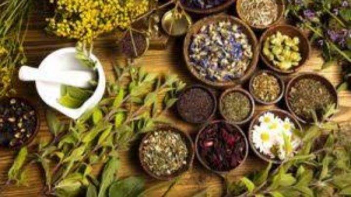 Les Plantes Aident à Maintenir L'état Physique Et Mental