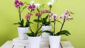Qui Utilise Les Plantes Cultive Le Bien être