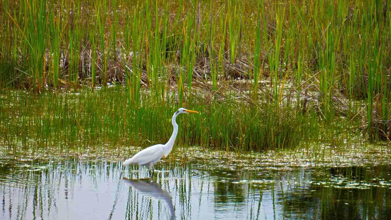 Création du premier centre dédié à la conservation et à la gestion des zones humides sous le MoEFCC à Chennai