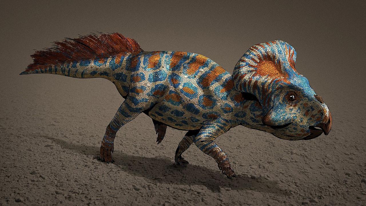 Les volants de cou des dinosaures Protoceratops comme celui de cette illustration étaient probablement une forme de sélection sexuelle.