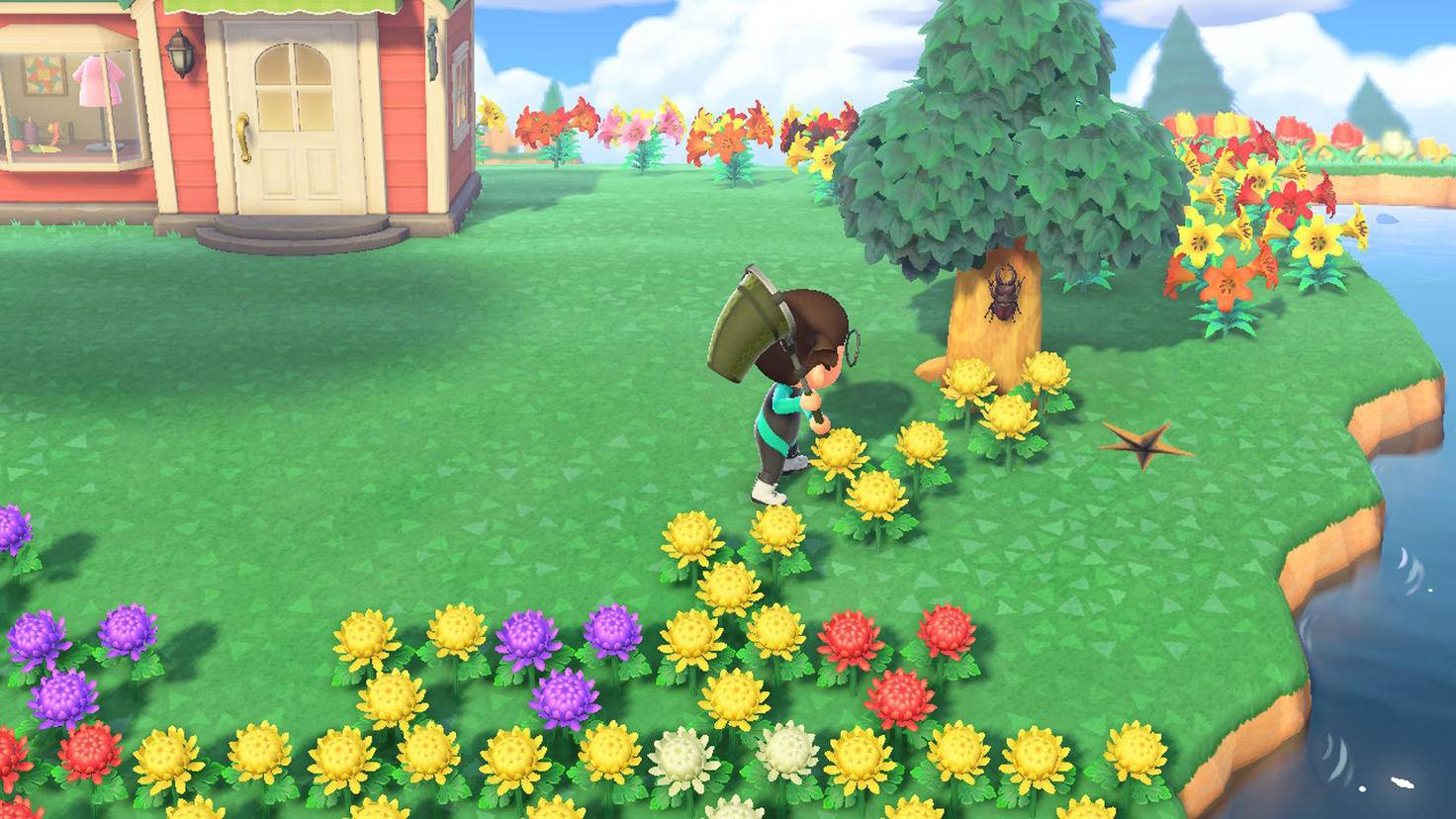 Animal Crossing Scarabée New Horizons