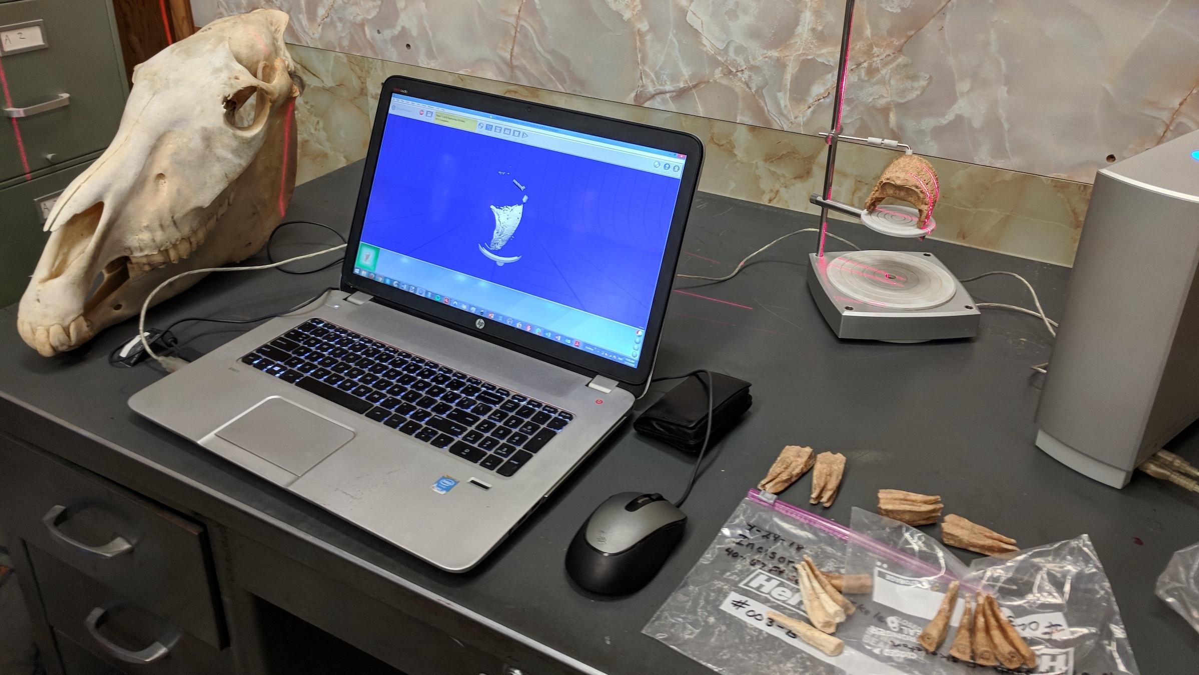 Les chercheurs font un scan 3D de l'os du cheval Lehi.