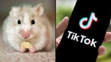 Qu'est Ce Que Le Hamster Cult Sur Tiktok? Photos De Profil