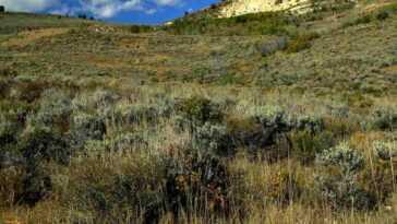 Découverte D'une Nouvelle Espèce De Plante Alpine Endémique Du District