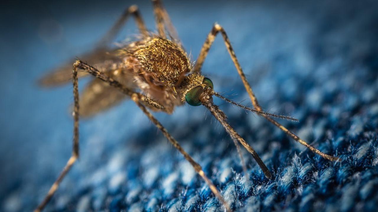 Apprentissage automatique, imagerie satellite utilisée pour suivre les mouvements des moustiques porteurs de maladies