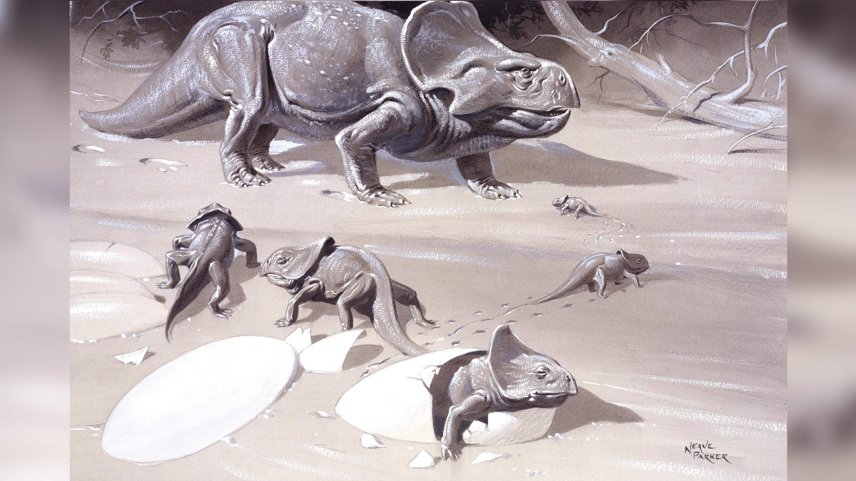 Dans le concept de cet artiste, un Protoceratops adulte est vu avec ses petits.
